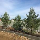 Посадка крупномерных деревьев от 2 м и выше, Екатеринбург