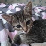 Милый котенок, Екатеринбург