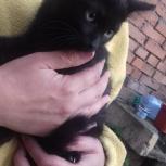 Котята от крысоловки 2 месяца, Екатеринбург