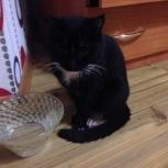 Найдена черная кошка., Екатеринбург