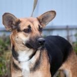 Химмаше-Академический потеряна собака коричневая небольшая ушастая., Екатеринбург