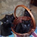 Черные котята в хорошие руки даром, Екатеринбург