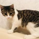 Котята, 5 мес., мальчик и девочка ищут дом и семью, Екатеринбург