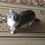 Пропал кот!!!, Екатеринбург