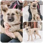 Собака-подросток Злата в поисках дома, Екатеринбург