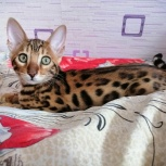 Леопардовая лисичка, Екатеринбург