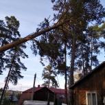 Спил, обрезка деревьев любой сложности. Арбористы, Екатеринбург