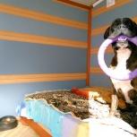 Передержка собак любых размеров, можно агрессивных без прививок, Екатеринбург