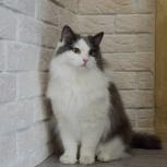 Длинношёрстный котик, Екатеринбург