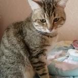 Умный и игривый котик ищет дом, Екатеринбург