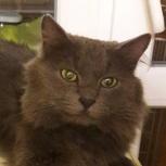 Котя,3 года, ищет любящий дом, Екатеринбург