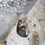 Найдена кошка, потерявшаяся на Степана Разина, 128, Екатеринбург