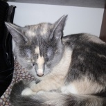 Найдена кошка. Старая Сортировка, Екатеринбург