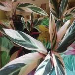 Комнатное растение, Екатеринбург