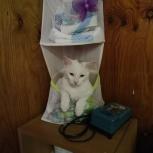 Потерялся белый котик с чёрным пятнышком в районе Весёлая горка, Екатеринбург
