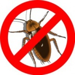 Уничтожение насекомых тараканов, клопов,муравьёв., Екатеринбург