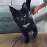Потерялась кошка, Екатеринбург