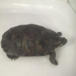 Найдена черепаха, Екатеринбург