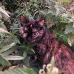 Пропала кошка, Екатеринбург