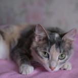 Кошечка Алиса, 1 год, Екатеринбург