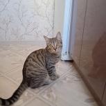 котик срочно ищет дом, Екатеринбург