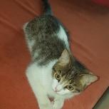 Найден котенок, девочка, 3 месяца, Екатеринбург