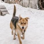 Собака Рада, 1 год в поисках хозяев, Екатеринбург