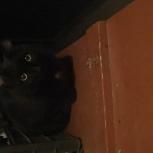 Найден чёрный кот! Заречный микрорайон, Готвальда., Екатеринбург