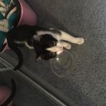 Найден черно белый кот, Екатеринбург
