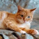 Кошка Ириска, девочка примерно 1,5-2 года, Екатеринбург