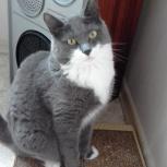 Красавица кошка Эйва ищет дом, Екатеринбург