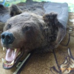 Чучело медведя ковер, Екатеринбург