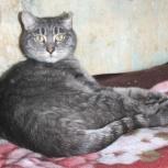 Безухов Пьер мечтает о доме, кот, Екатеринбург