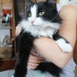Котик ищет дом, Екатеринбург