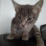 котята в добрые руки, Екатеринбург