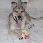 Срочно ищет дом собака Женька, Екатеринбург