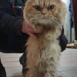 Найден кот!, Екатеринбург