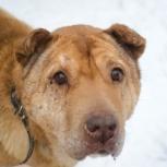 Умница собака Цыпа ищет дом, Екатеринбург