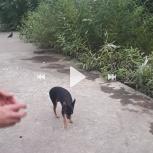 Потерялась собачка 19.07 в районе 20:00, Екатеринбург