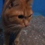 Найден кот., Екатеринбург