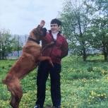 Дрессировка собак, с выездом на дом., Екатеринбург