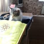 Отдам котенка в добрые руки, Екатеринбург