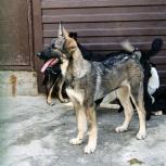 Симпатичных щенки  в добрые руки, Екатеринбург