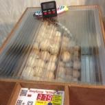 Инкубационное яйцо от породных кур., Екатеринбург