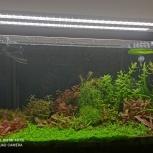 Растения для аквариума, Екатеринбург