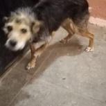Найдена собачка, Екатеринбург