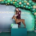 Подготовка собак к выставкам(хендлер), Екатеринбург