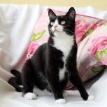 Гавана, кошка-миниатюра, 5 лет, Екатеринбург