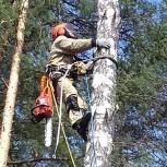 Спил и обрезка деревьев на участке, Екатеринбург