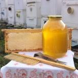 Мёд уральский кипрейный, Мед в сотах, Екатеринбург
